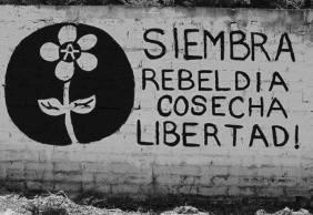 siembra-rebeldc3ada-282x194